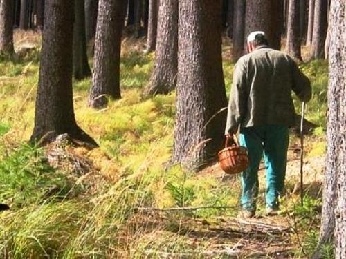 Чоловік пішов по гриби і заблукав у лісі