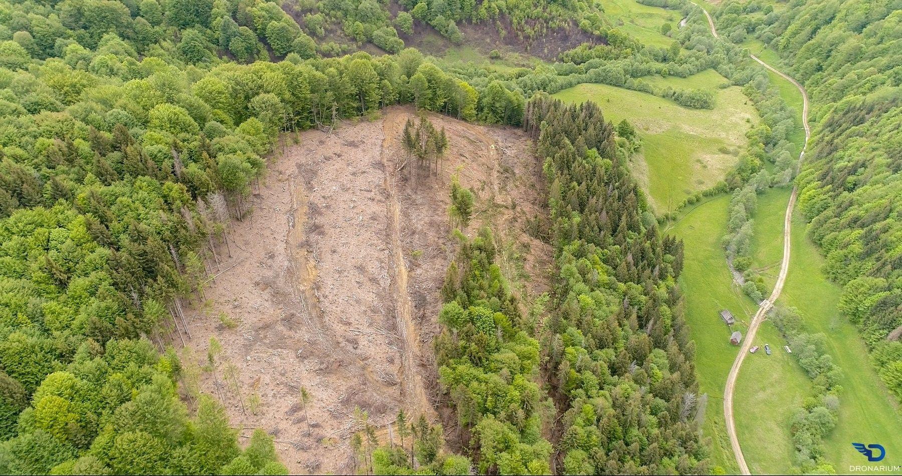 У мережу виклали фото вирубок лісів Карпат