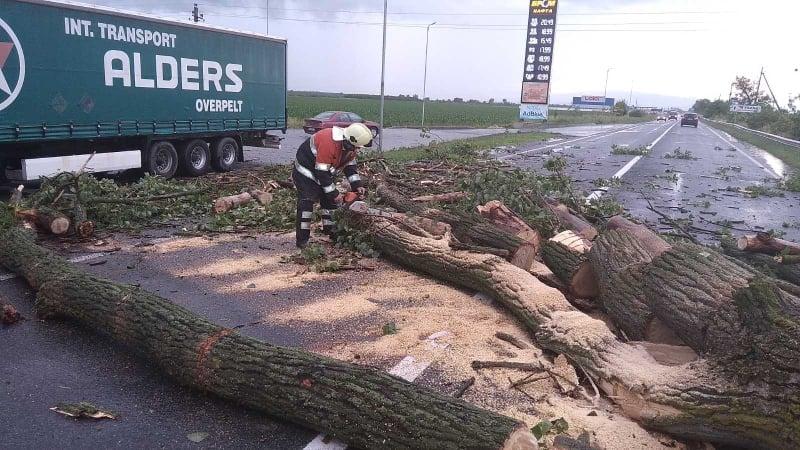 Дерево впало на трасу Київ-Чоп та перекрило дорогу
