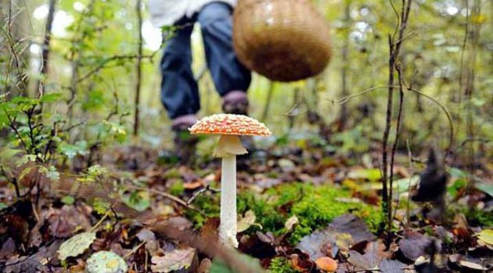 П'ятеро мукачівців пішли по гриби і заблукали. Їх розшукувало 25 людей