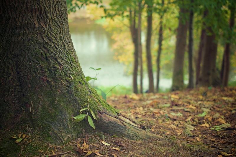 Володимир Зеленський підписав закон про інвентаризацію лісів в Україні