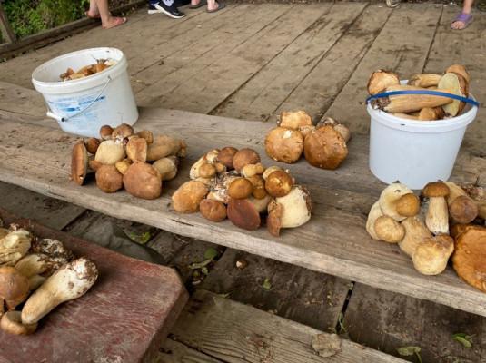 Грибний бум на Мукачівщині або як місцеві заробляють на дарах лісу