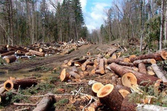 Шмигаль заявив, що в Україні посадили більше лісів, ніж вирубали