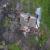 На Закарпатті будинок розколовся навпіл: опубліковано відео