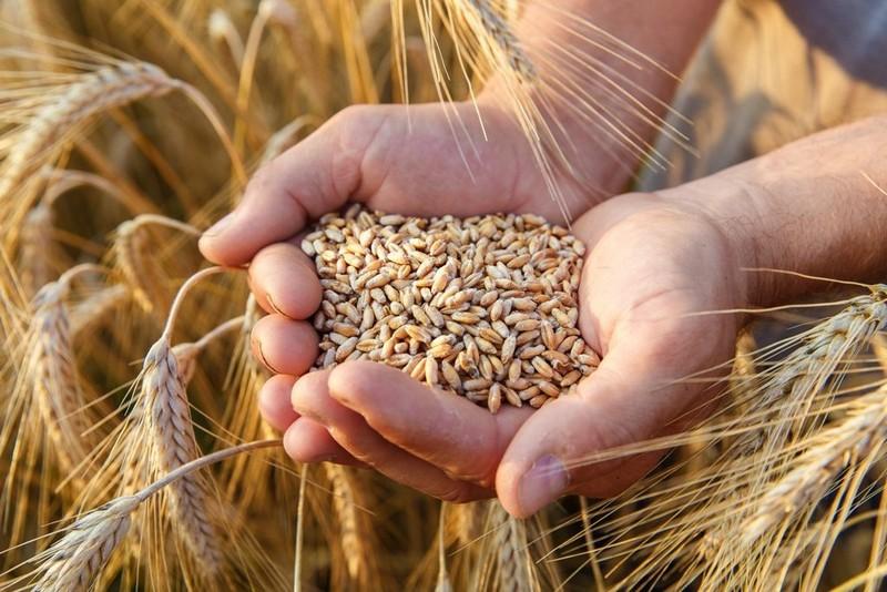 Україна експортувала рекордну кількість зерна