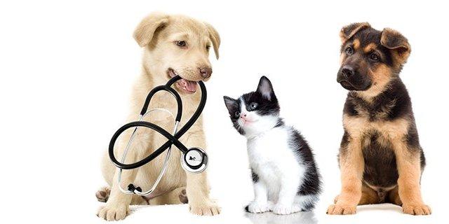 Працівників ветеринарної медицини вітають із професійним святом