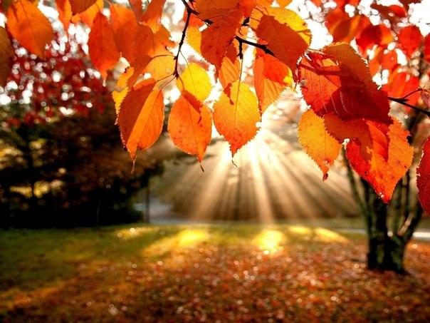 Погода на вересень 2020 та якою буде осінь загалом: перші прогнози
