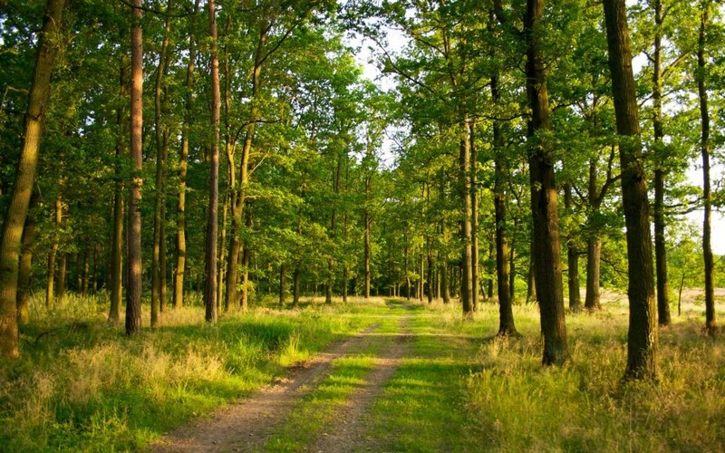 Пішов у напрямку лісу і не повернувся: на Закарпатті зник безвісти чоловік