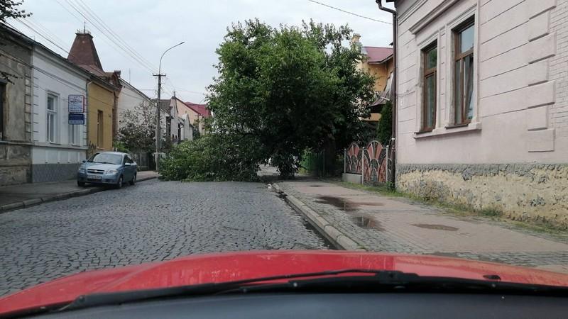 На одній із вулиць Мукачева впало дерево. Рух ускладнено
