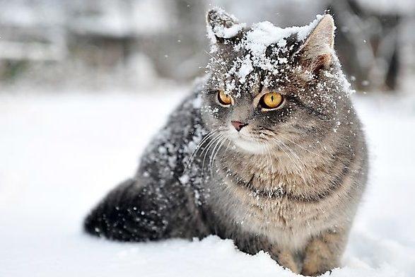 Перші заморозки та перший сніг: коли чекати. Погода на осінь 2020 – погода на жовтень