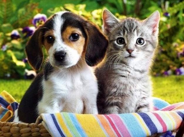 Депутати пропонують українцям реєструвати домашніх тварин, зокрема котів і собак
