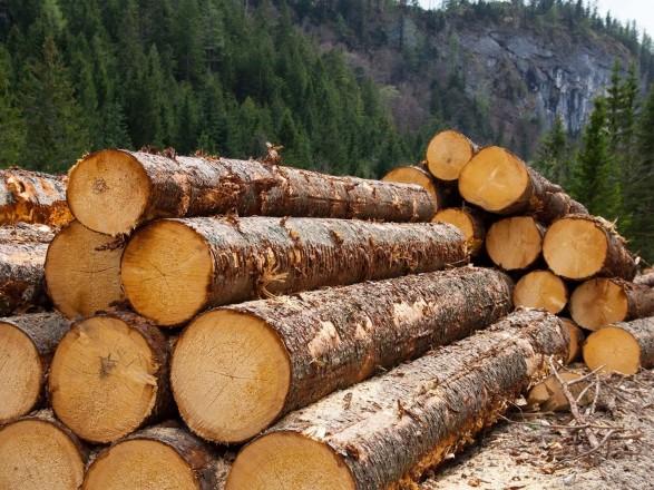 На Закарпатті викрили схему контрабанди деревини