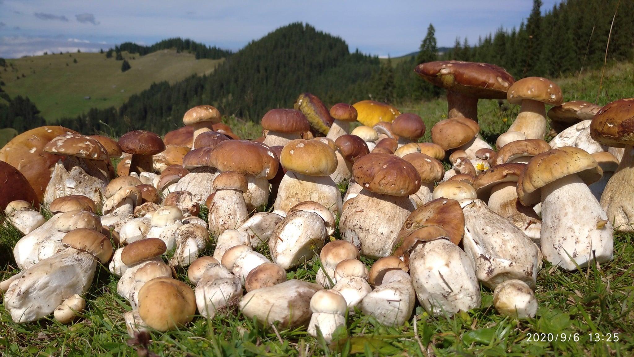 На Закарпатті – грибний бум: добірка фото із соцмережі