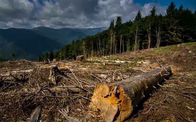 """Зоя Темнохудова: """"Збереження лісу потребує виваженої державної політики"""""""