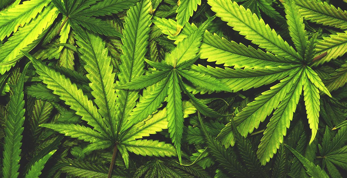 Поліція вилучила у закарпатки наркотики