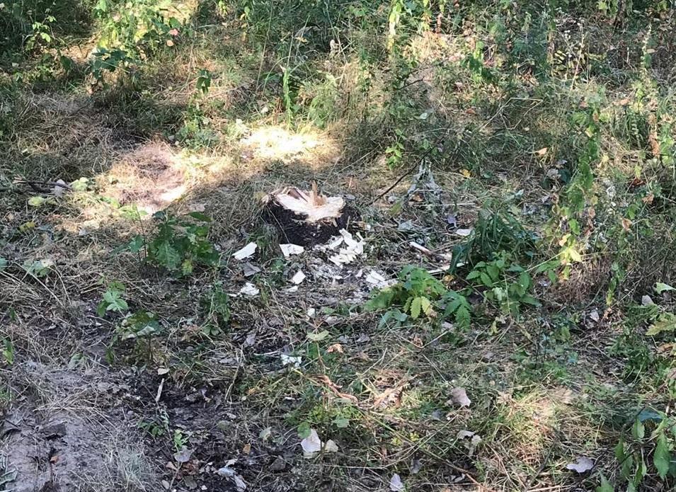 На Тячівщині зафіксували незаконну рубку лісу