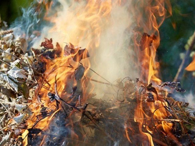 Закарпатцям, які спалюють сухе листя, загрожує кримінальна відповідальність