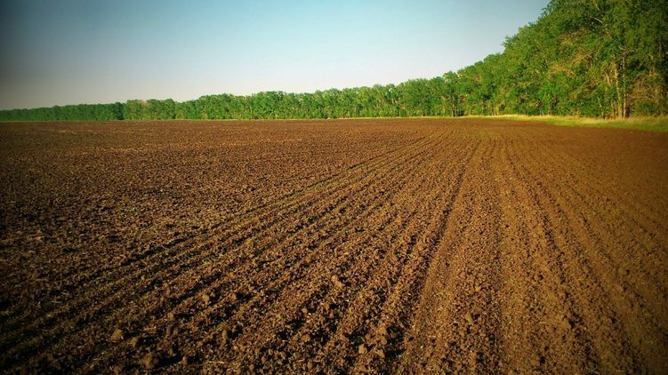 Державі повернули незаконно відібрану земельну ділянку на Тячівщині