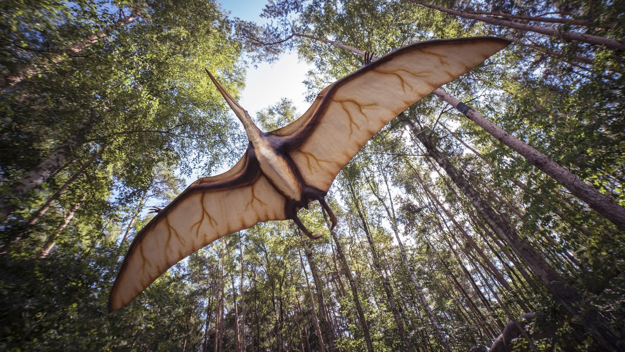 """Парк динозаврів та розваг """"DinoPark Берегово"""" на Закарпатті: коли відкриття та графік роботи"""