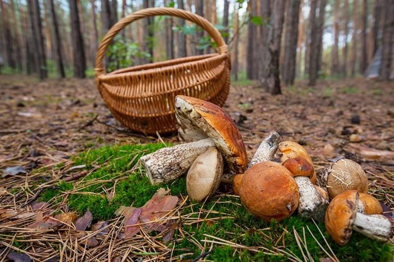 Чоловіка із села Чорна Тиса, який пішов по гриби в ліс, знайшли мертвим