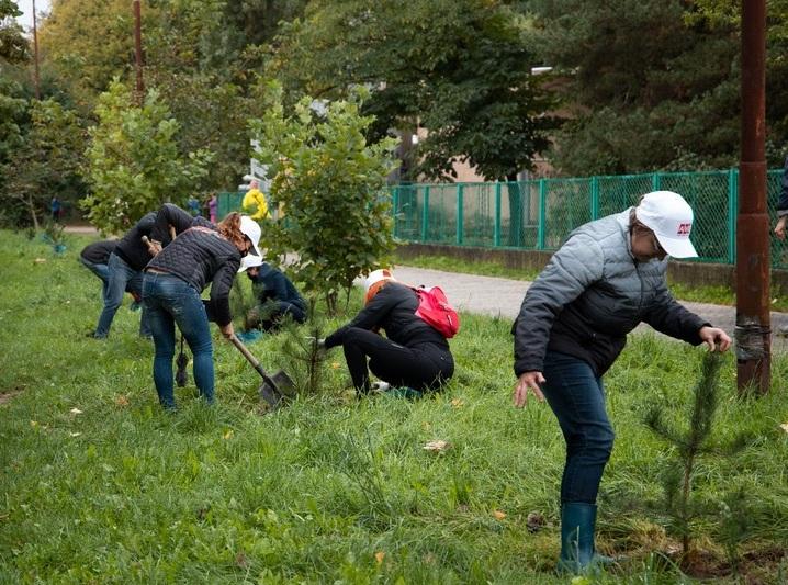 """Ужгородці долучились до акції """"Мільйон дерев за добу"""""""