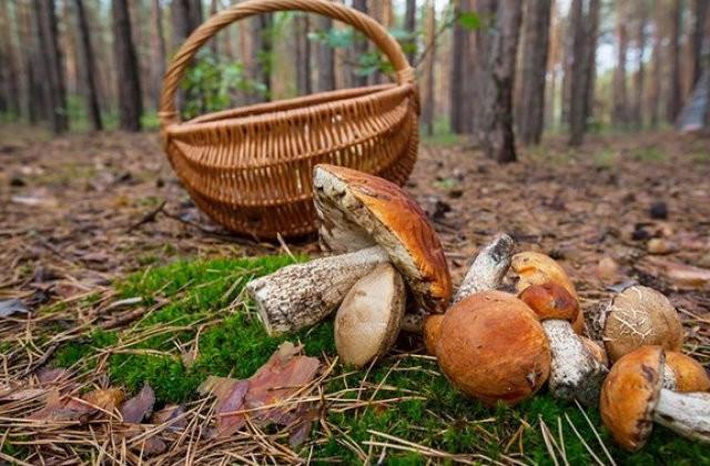 Черговий грибник заблукав у лісах Закарпаття