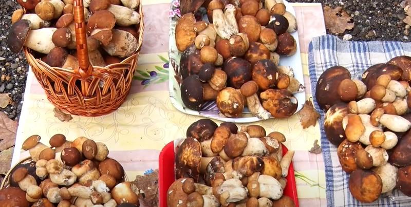 Грибний сезон на Закарпатті: у скільки обійдеться кілограм білих грибів