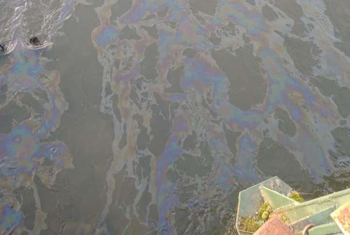 Ужгородська міськрада озвучила попередні результати аналізу води в Ужі