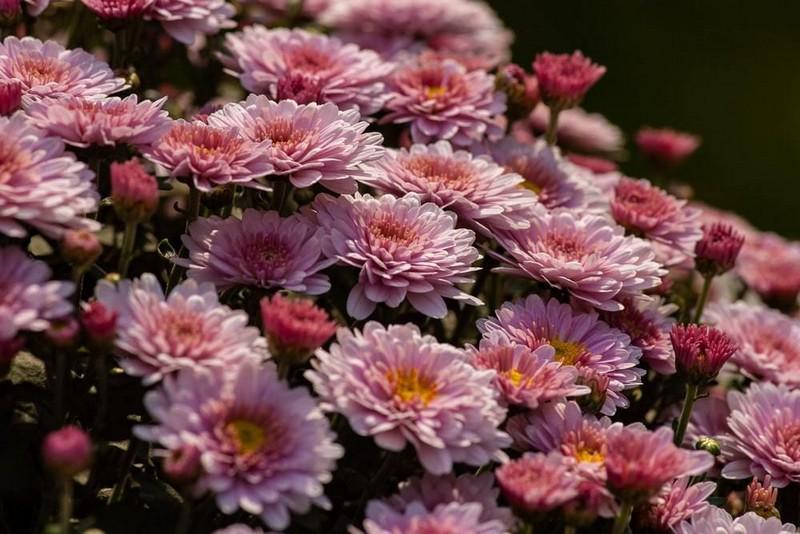 Скільки цьогоріч коштують квіти та вінки до 1 листопада