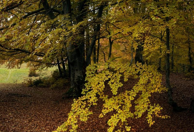 Дві ужгородки заблукали у лісі