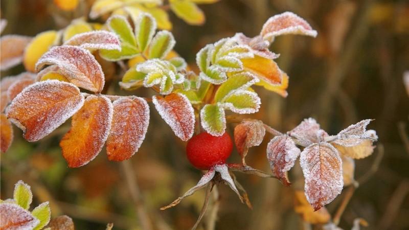 Заморозки і туман: синоптики дали прогнози на завтра