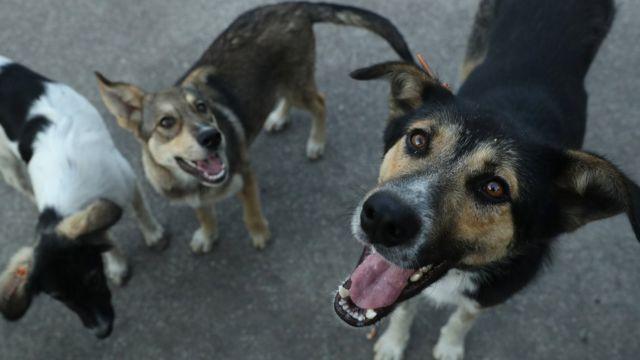 На жінку у Сваляві напала зграя безпритульних собак