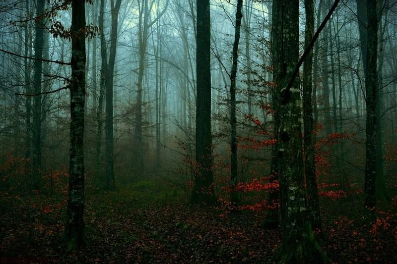 Ввечері у лісі біля села Бронька знайшли труп чоловіка