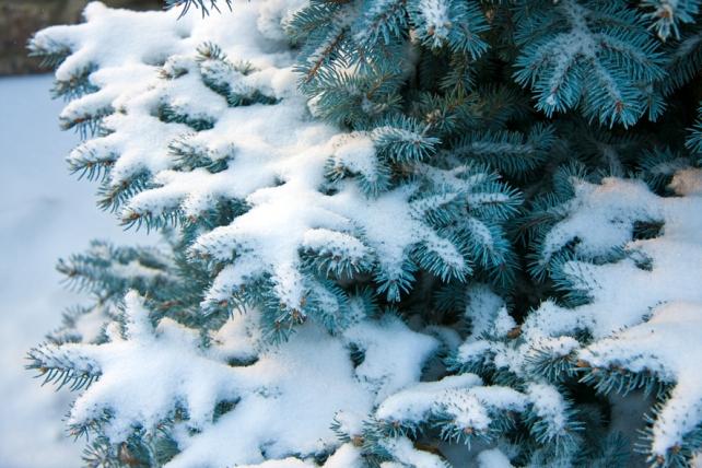 Погода 29 листопада: синоптики попереджають про морози і сніг у Закарпатський області