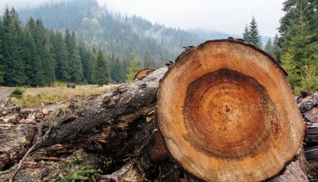 Через службову недбалість майстра лісу зрубали понад 100 дерев