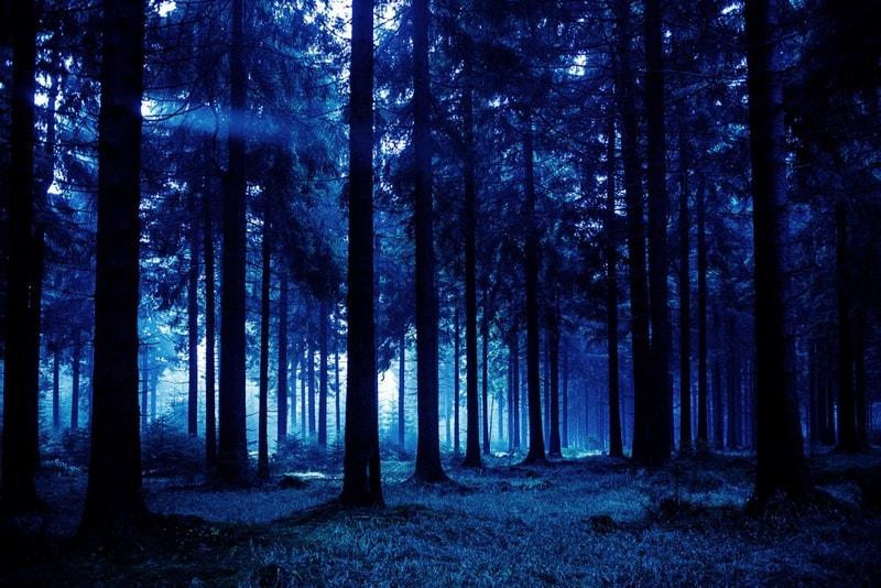 У лісі затримали ужгородця: відома причина