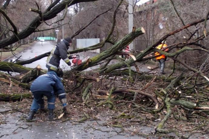 Погіршення погодних умов: сильний вітер наробив шкоди на Закарпатті