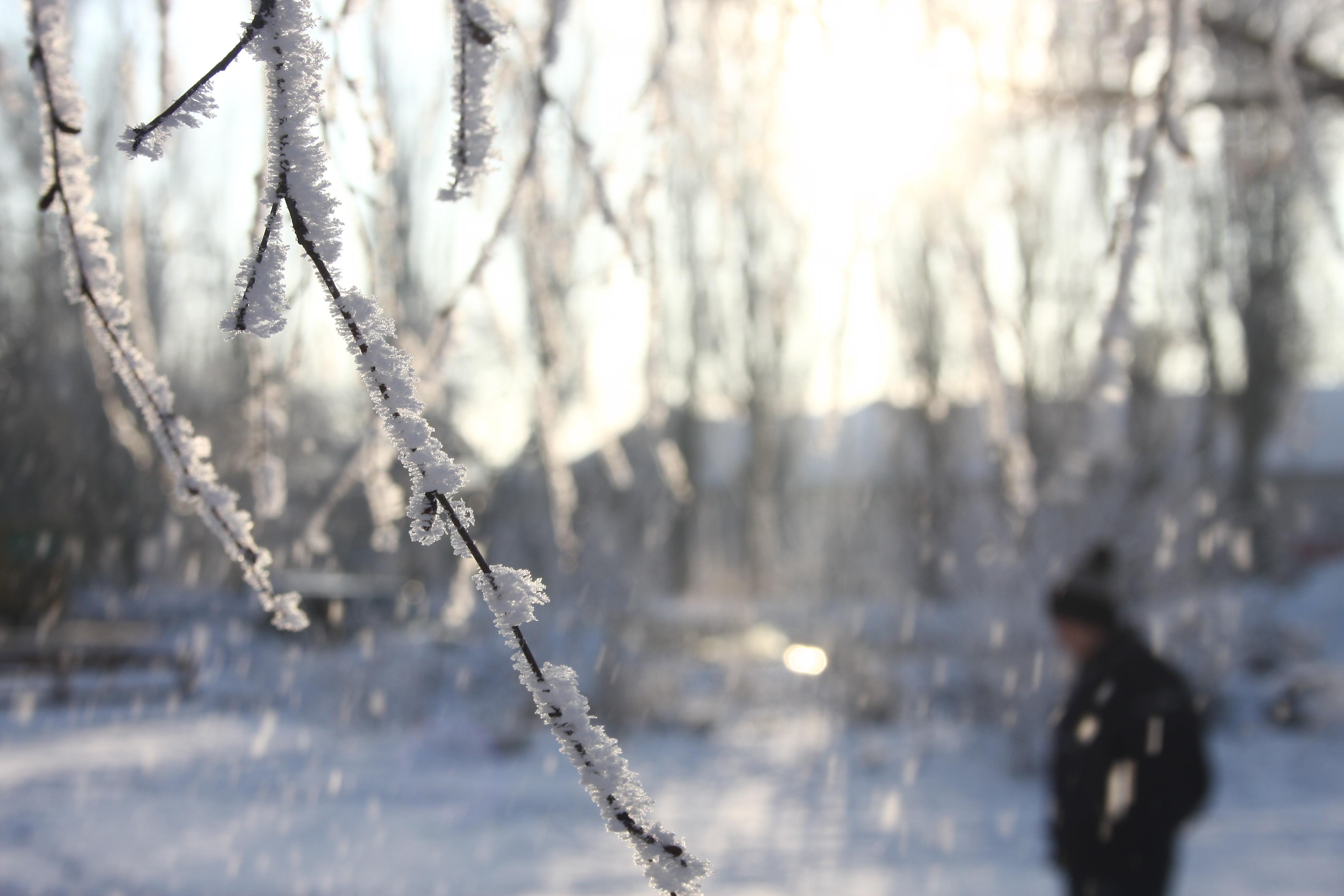 На Закарпатті найближчими днями – сильні морози