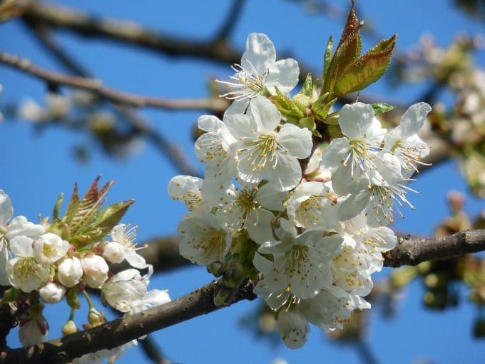 Якою буде весна 2021 року: погода на березень, квітень та травень
