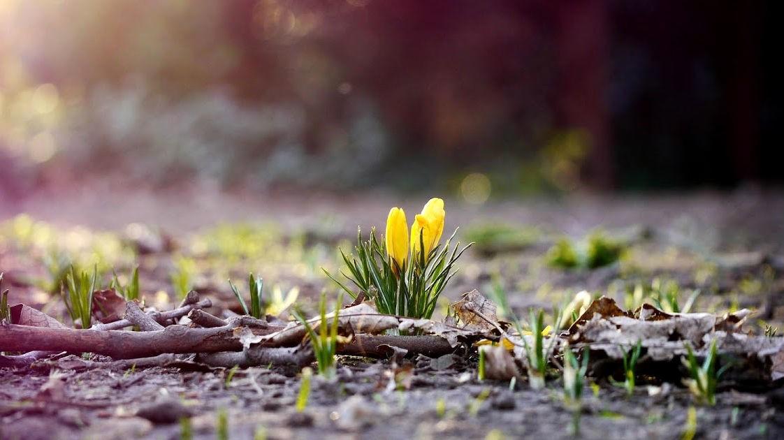Початок весни: якою буде погода у березні