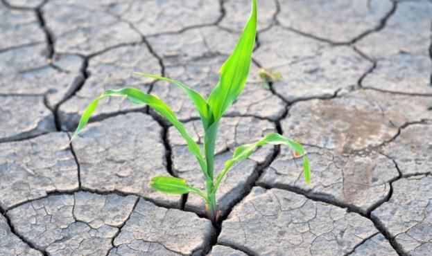 Погода на 2021 рік: в Україні прогнозують посуху