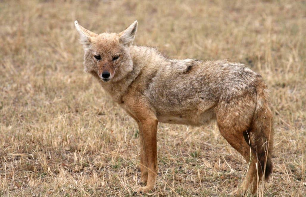 На Закарпатті застрелили небезпечну екзотичну тварину