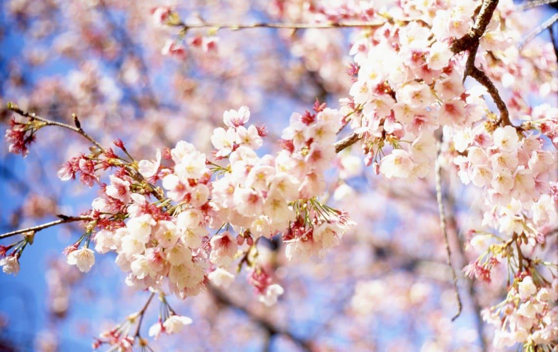 Погода на квітень 2021 року: коли запанує справжня весна