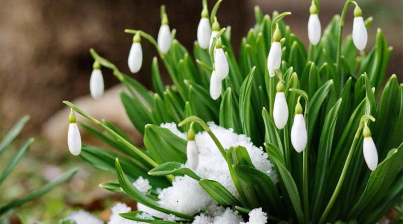 Синоптики попереджають про сніг та нічні морози