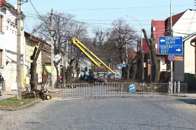 У Мукачівській громаді обстежать та видалять аварійні дерева