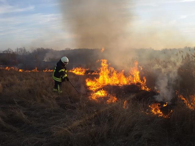 На Берегівщині згоріли 4 гектари сухої трави
