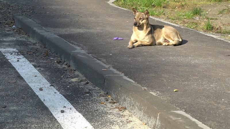 У Мукачівській ОТГ безпритульних собак і котів лікуватимуть та стерилізуватимуть