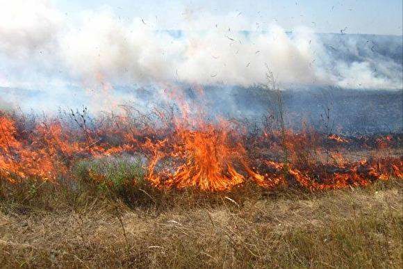 У селі на Мукачівщині вигоріли 3 гектари трави