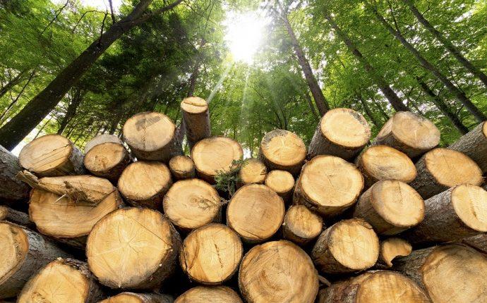 Прокуратура подала позов через виявлені незаконні рубки лісу зі збитками на майже 7 мільйонів