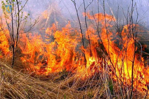 На Ужгородщині горіли 5 Га сухої трави